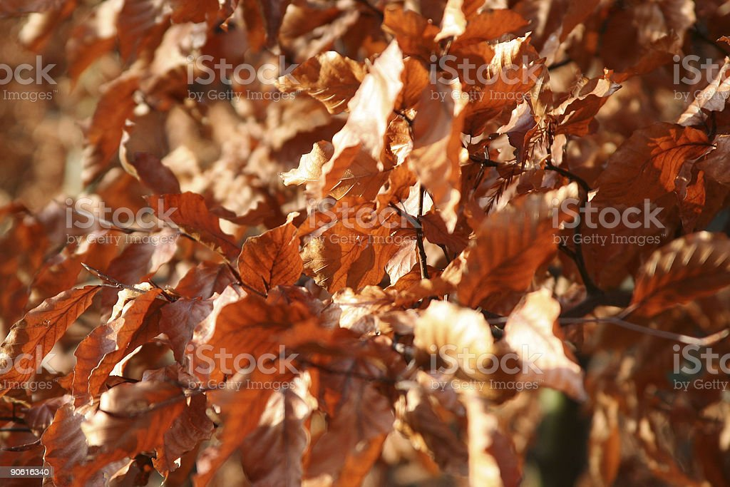 Winter Leafs royalty-free stock photo