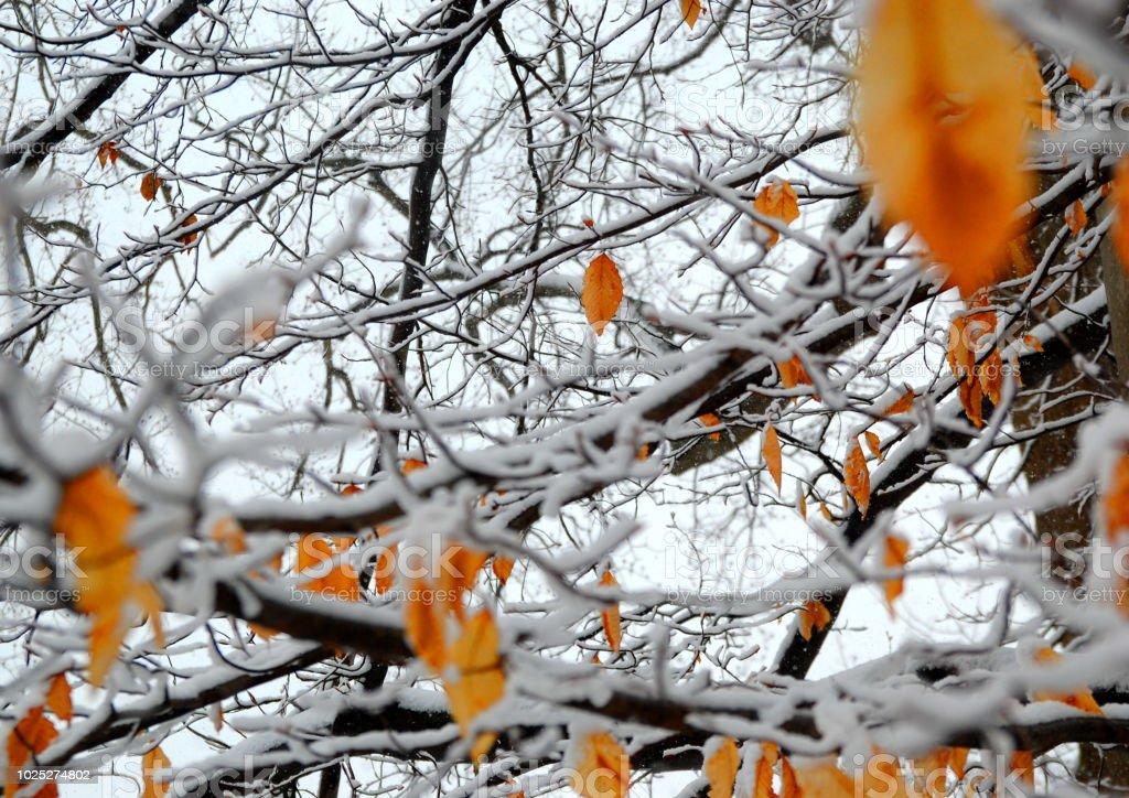 겨울 휴가 스톡 사진