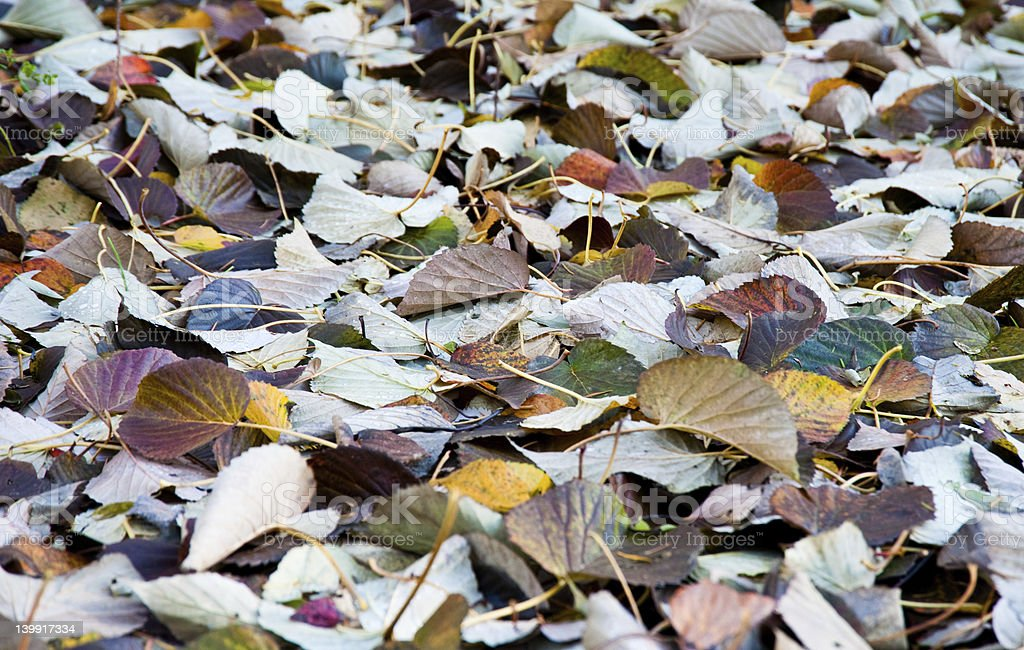Winter leaves stock photo