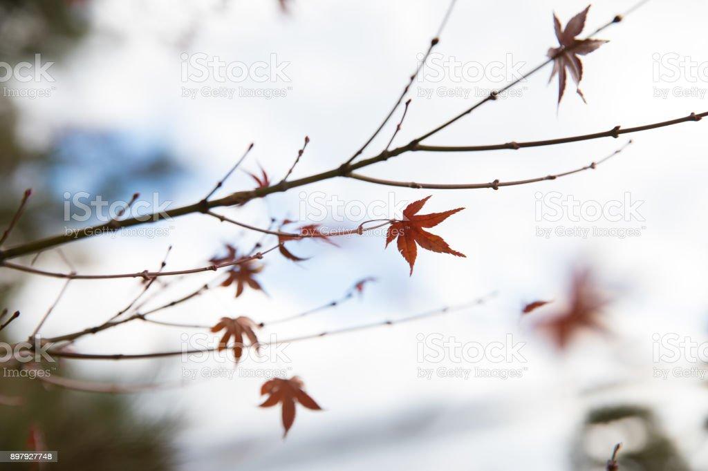 Winter leaves stock photo
