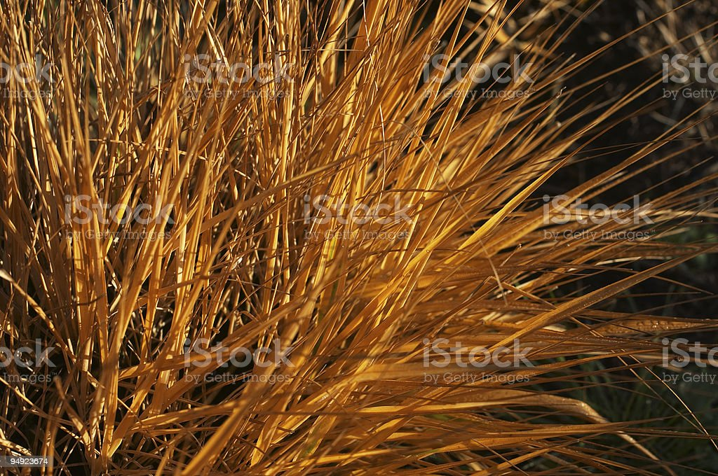 Clump of fiery orange grass springing from burnt ground stock photo