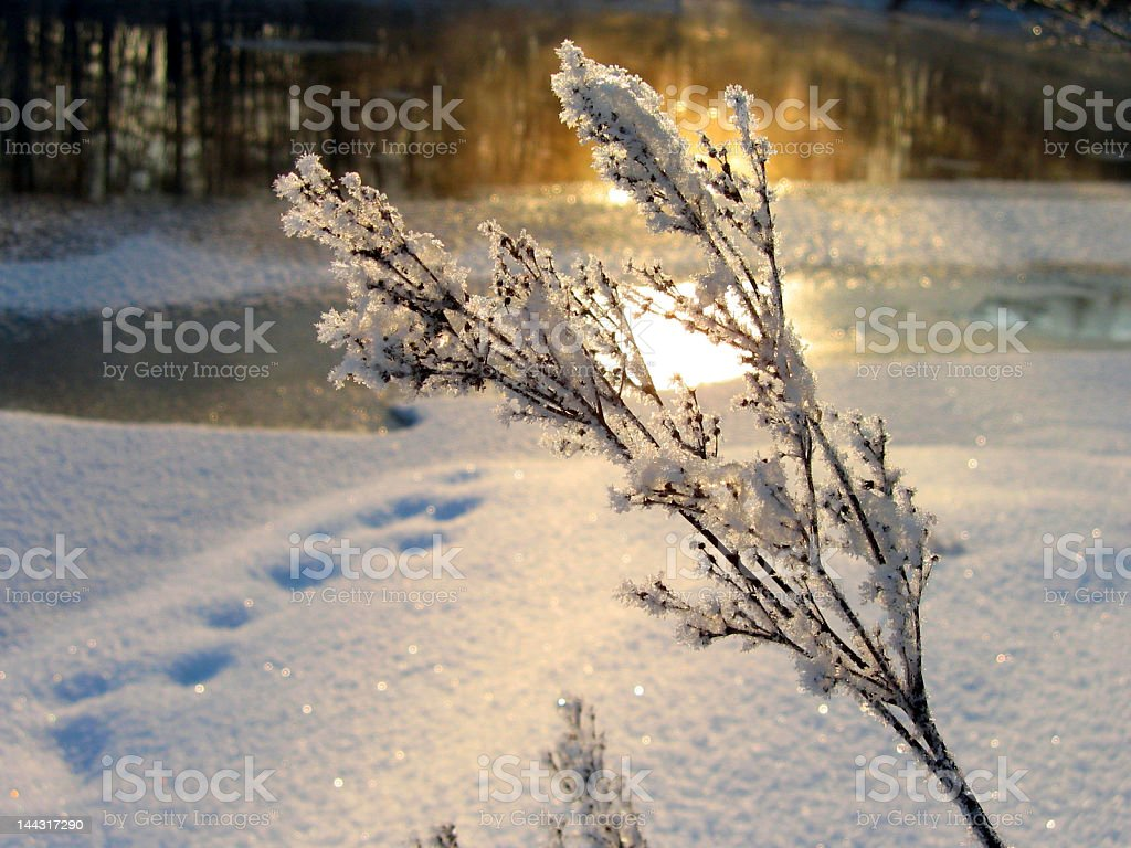 Winter light stock photo