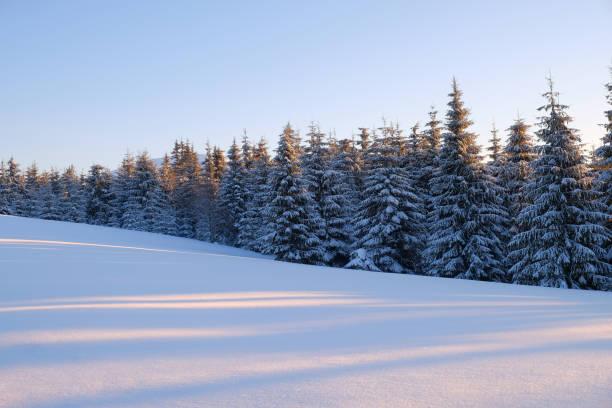 vinter lndscape av en bergskog täckt med snö vid solnedgången. - pine forest sweden bildbanksfoton och bilder