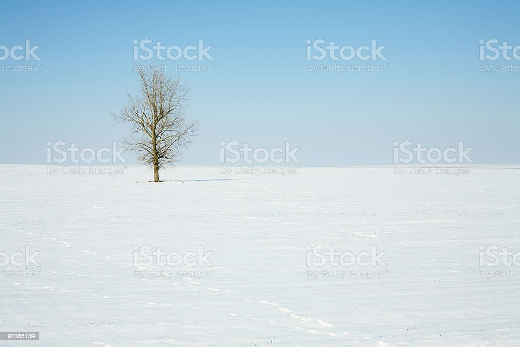 Winter lonely tree royalty-free stock photo