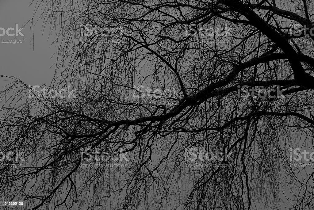 Winter monochrome stock photo