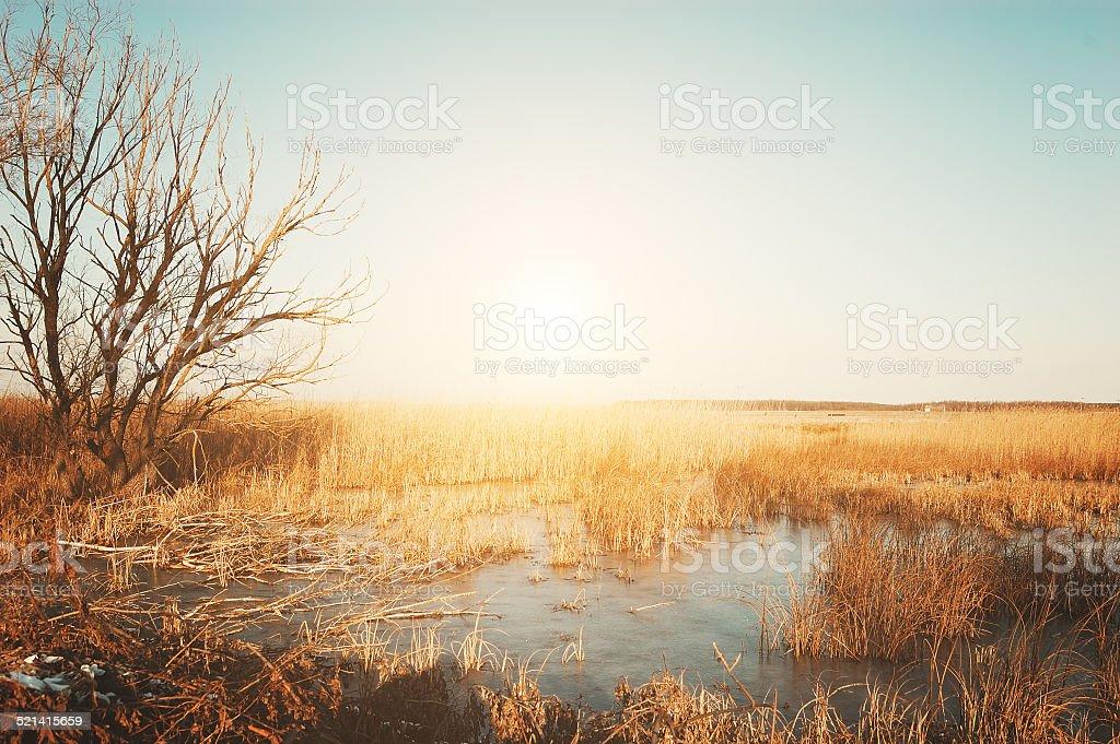 Inverno na moorland - foto de acervo