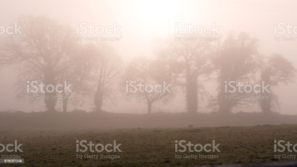 Winter morning in Ireland royalty-free stock photo