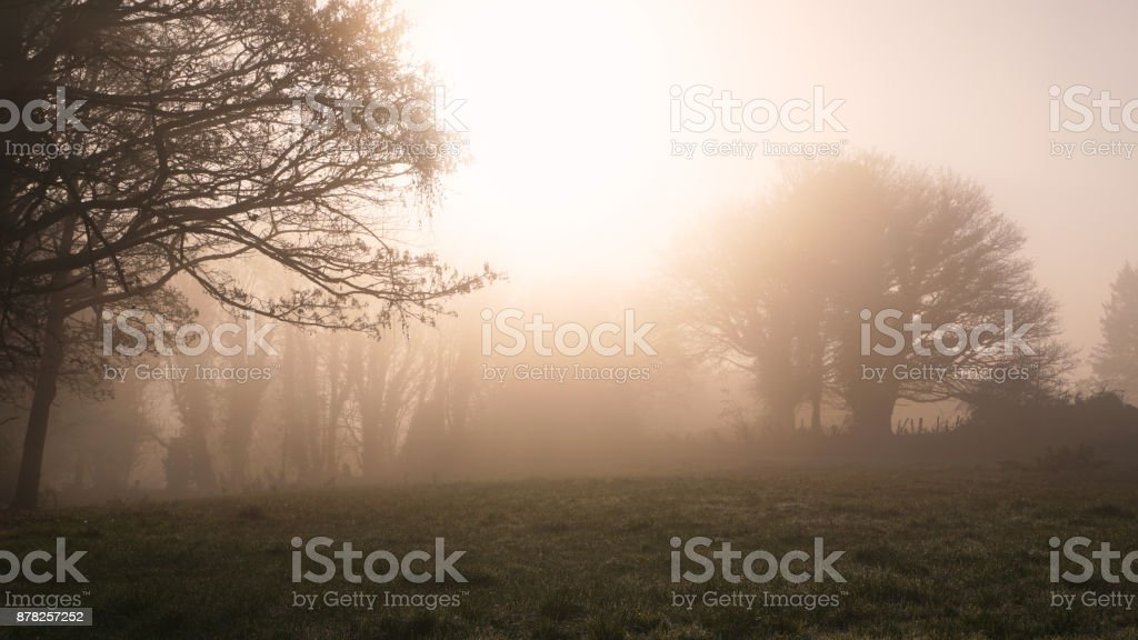 Winter morning in Ireland stock photo
