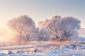 Winter morning landscape. Trees covered by frost illuminated by pink sunlight. Snowy christmas background.