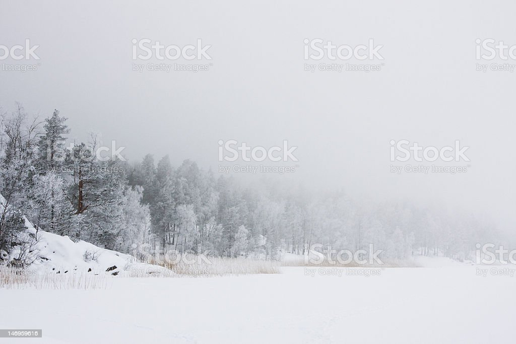 Winter morning on forest lake royalty-free stock photo