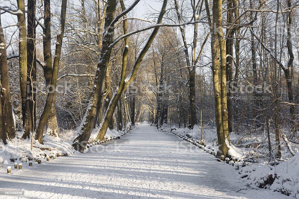 Winter-Morgen – Foto