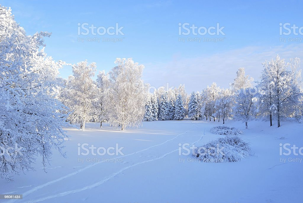 Winter morning royalty-free stock photo