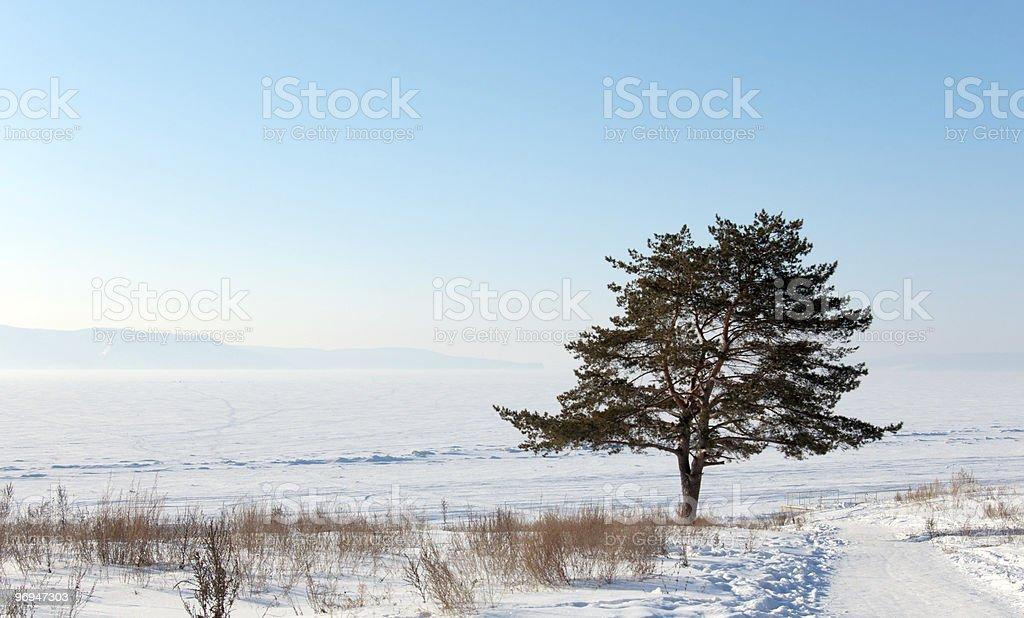 Winter morning scenery royalty-free stock photo