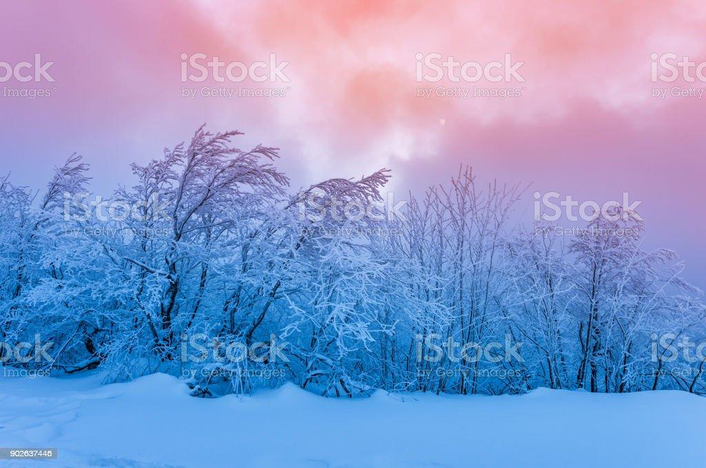 Winter-Bergwald im Schnee, farbenprächtigen Sonnenuntergang – Foto