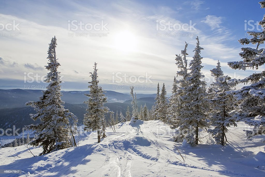 winter mountain forest royalty-free stock photo