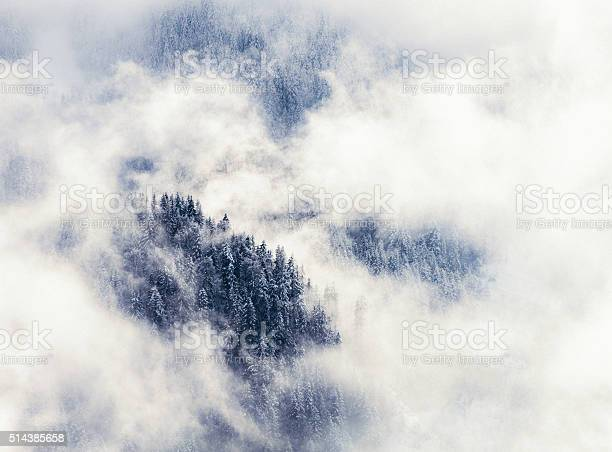 Photo of Winter mountain forest shrouded in mist