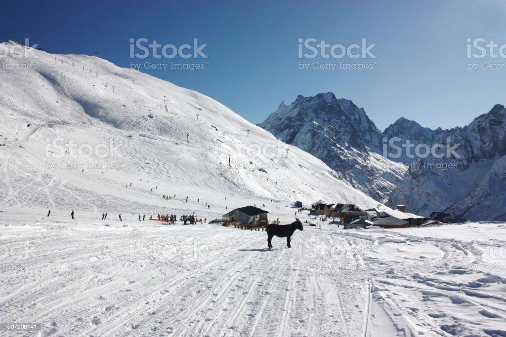 Winter mountain landscape with donkey royalty-free stock photo