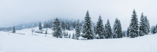 Winter mountain panorama - Ukraine Winter in Ukraine Carpatians mountains, Hi-Res panorama treelined stock pictures, royalty-free photos & images