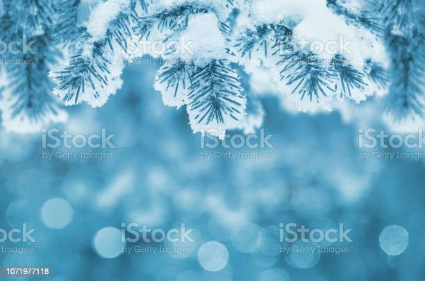 Photo of Winter natural background
