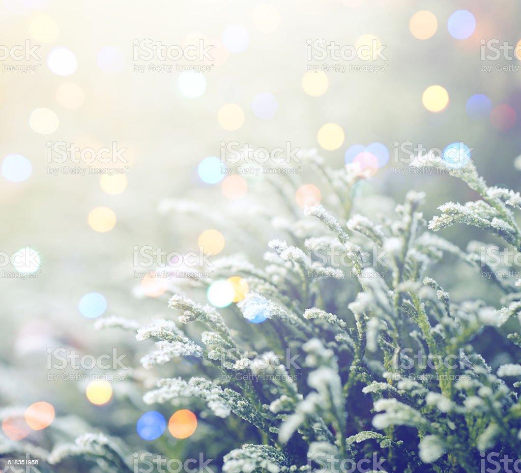 winter nature and Christmas light stock photo
