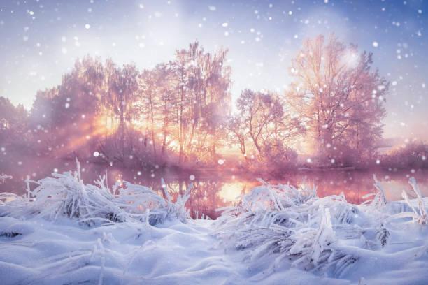 natur-winterlandschaft in schneefall. schnee und frostigen bäume im morgendlichen sonnenlicht. weihnachten hintergrund - schneeflocke sonnenaufgang stock-fotos und bilder