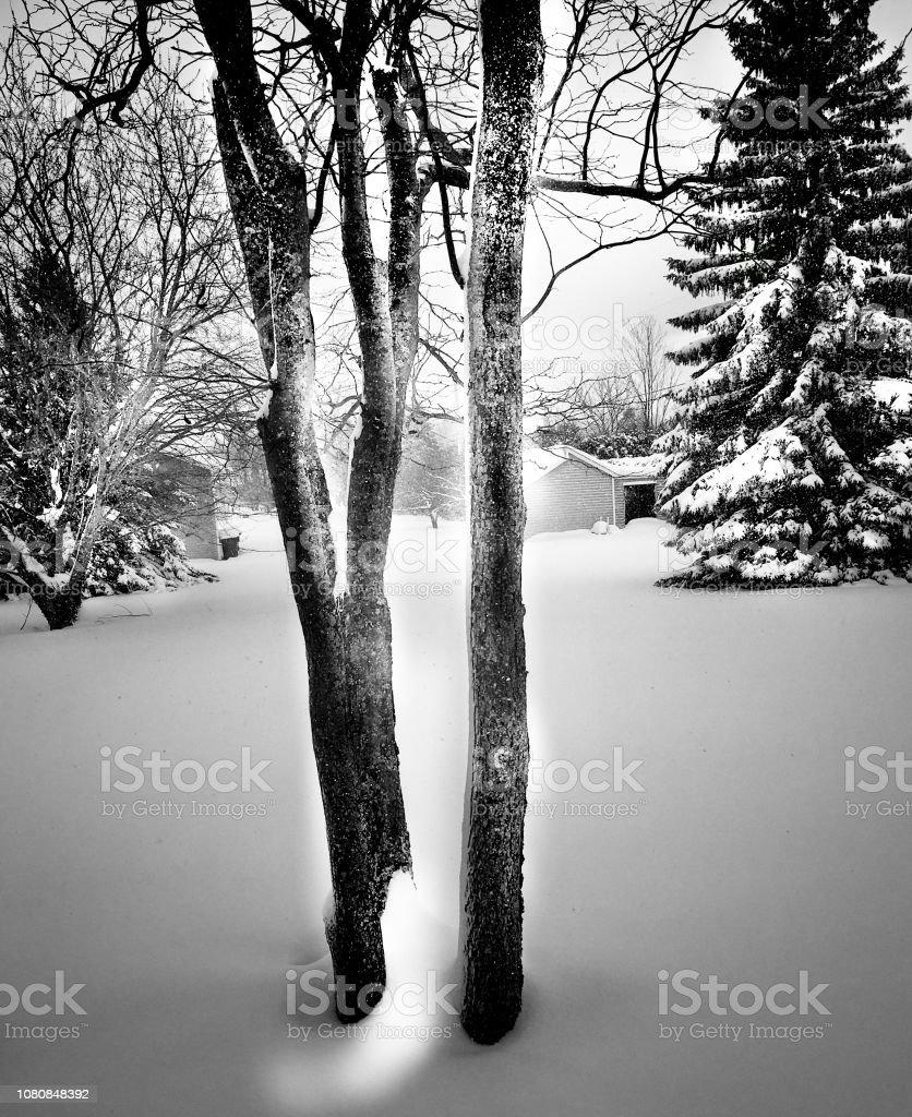 Winter nature stock photo