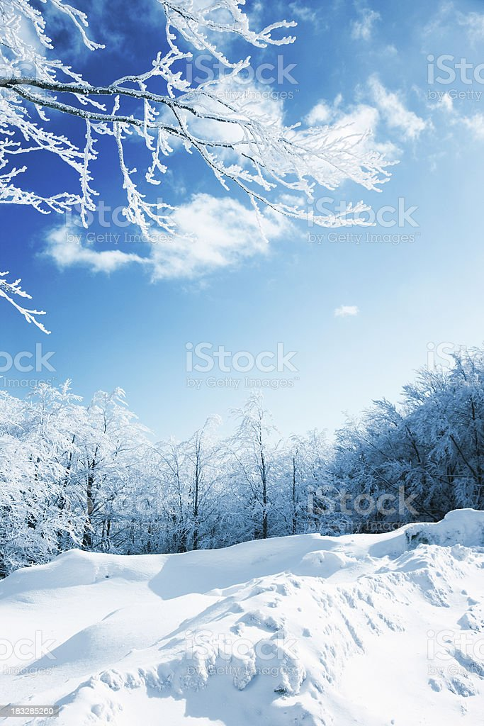 Winter nature royalty-free stock photo