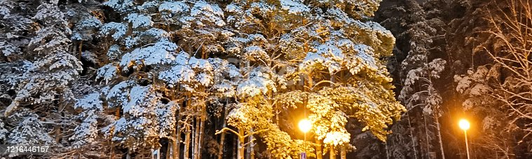 istock winter night in the forest 1216446157