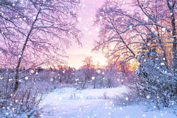 winter night landscape with sunset in forest beautiful winter landscape with forest, trees and sunrise. winterly morning of a new day. purple winter landscape with sunset december stock pictures, royalty-free photos & images