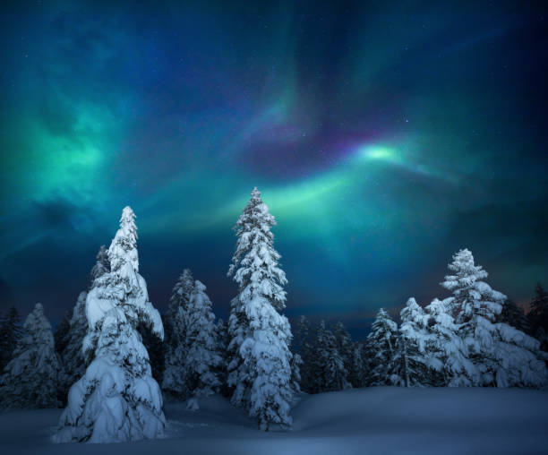Winter Night Snowcapped trees under the beautiful night sky with colorful aurora borealis. northern europe stock pictures, royalty-free photos & images