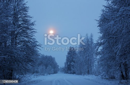winter night   snowy   landscape  with trees