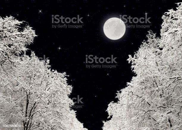 Photo of Winter night, trees under snow, full moon and stars