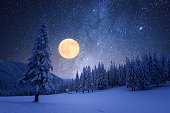 Winter night with full moon and starry sky. Frost covered trees in a mountain forest. Landscape with fresh snow