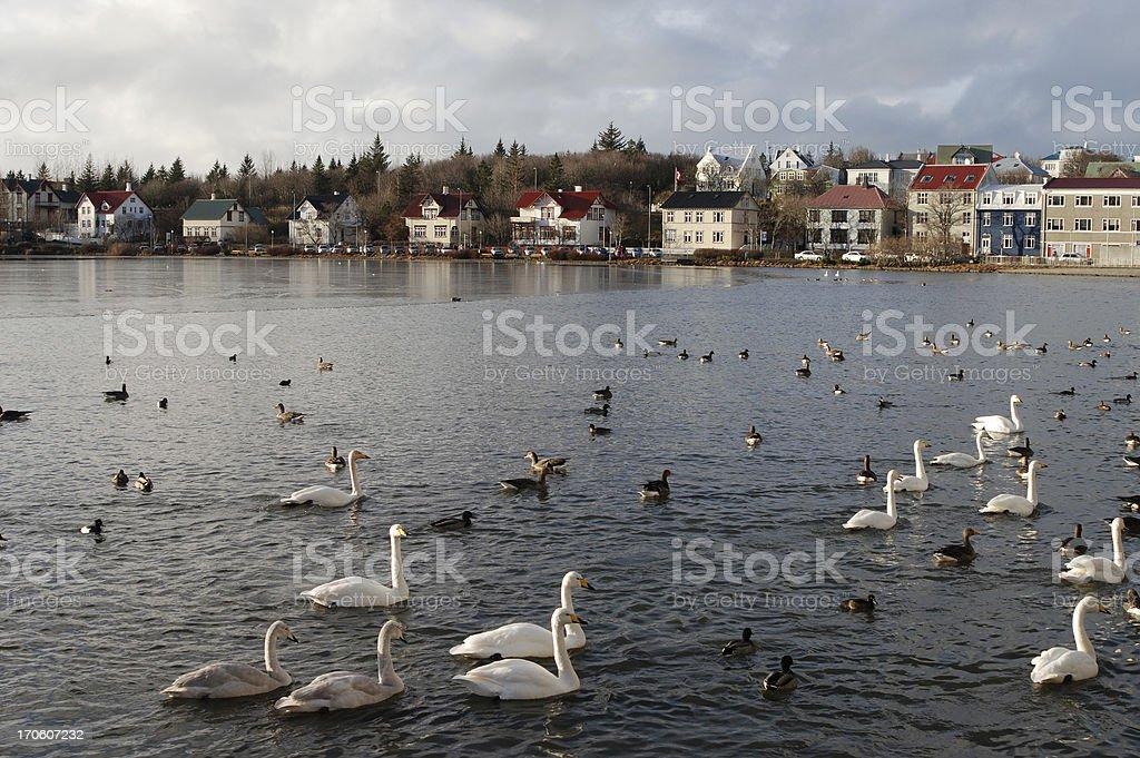 Winter on lake Tjornin in Reykjavik, Iceland royalty-free stock photo