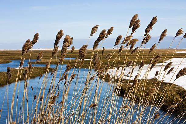 Winter on the Marsh stock photo
