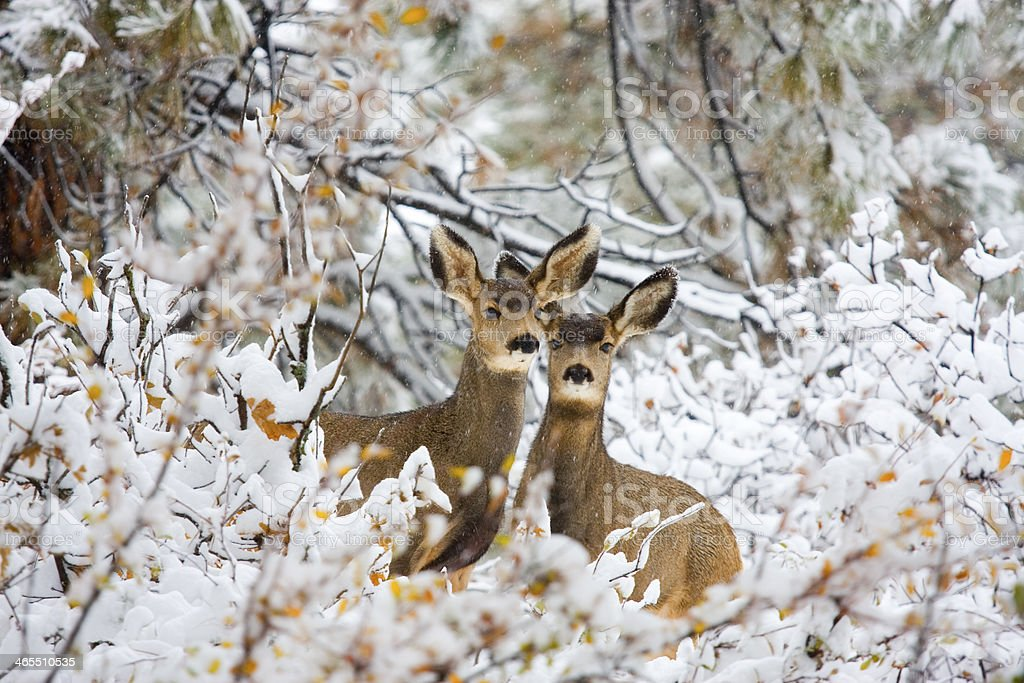 Winter Pair stock photo