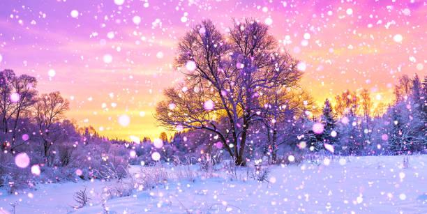 winterpanoramalandschaft mit wald, schnee bedeckten bäumen und sonnenaufgang. - schneeflocke sonnenaufgang stock-fotos und bilder