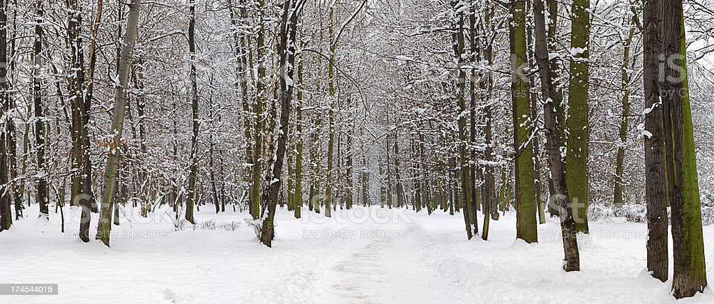 Winter panorama - park, 37MPix  XXXXL size royalty-free stock photo