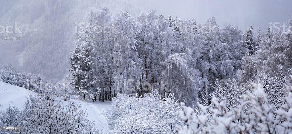 Winter panorama royalty-free stock photo
