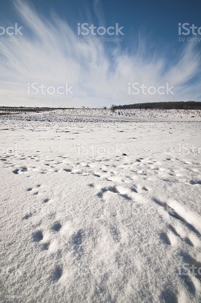 Winter panorama wide view royalty-free stock photo