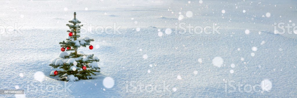 winter panorama with Christmas and  new year fir tree stock photo