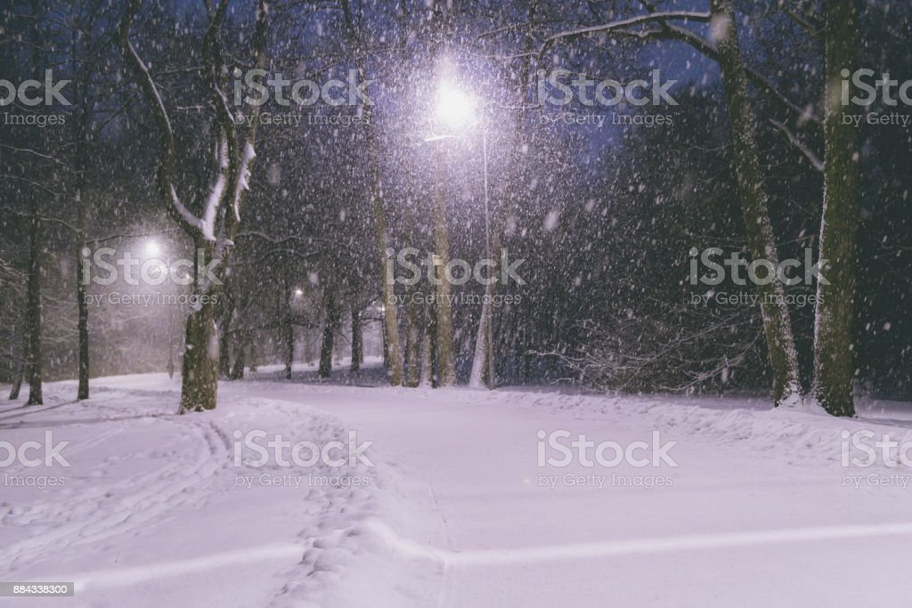 Winter park at night. Snow in a frozen dark park with snowflakes. Snowfall at night. Snow storm stock photo