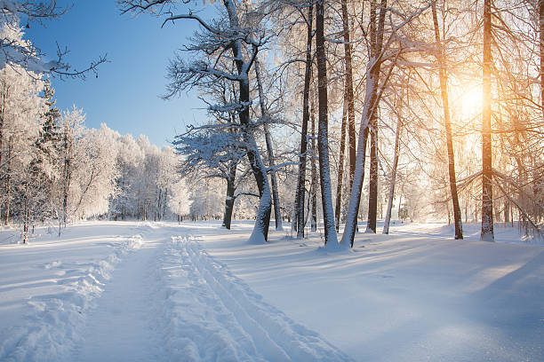 Winter park im Schnee – Foto