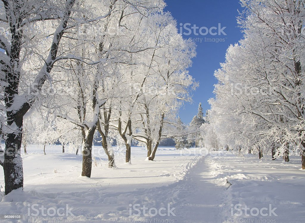Winter park in snow - Royalty-free Blue Stock Photo