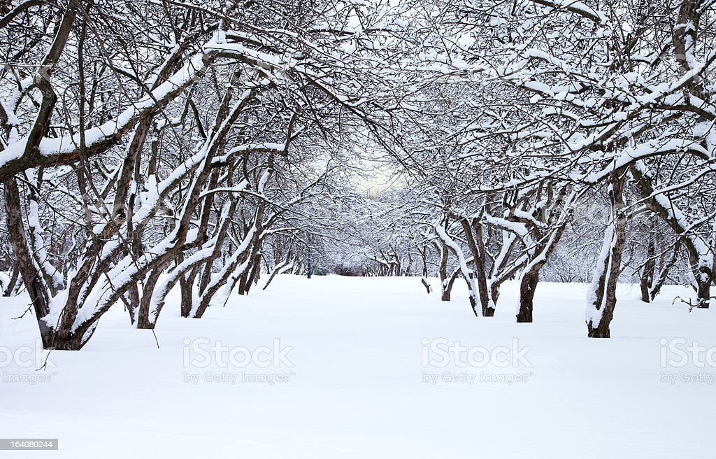 Winter park stock photo