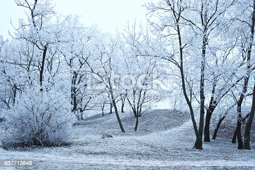 Beautiful trees covered with frost in winter foggy misty park