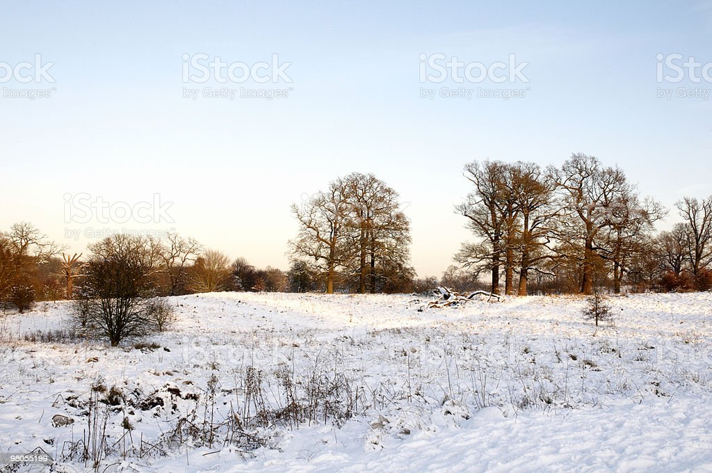 Winter parco foto stock royalty-free
