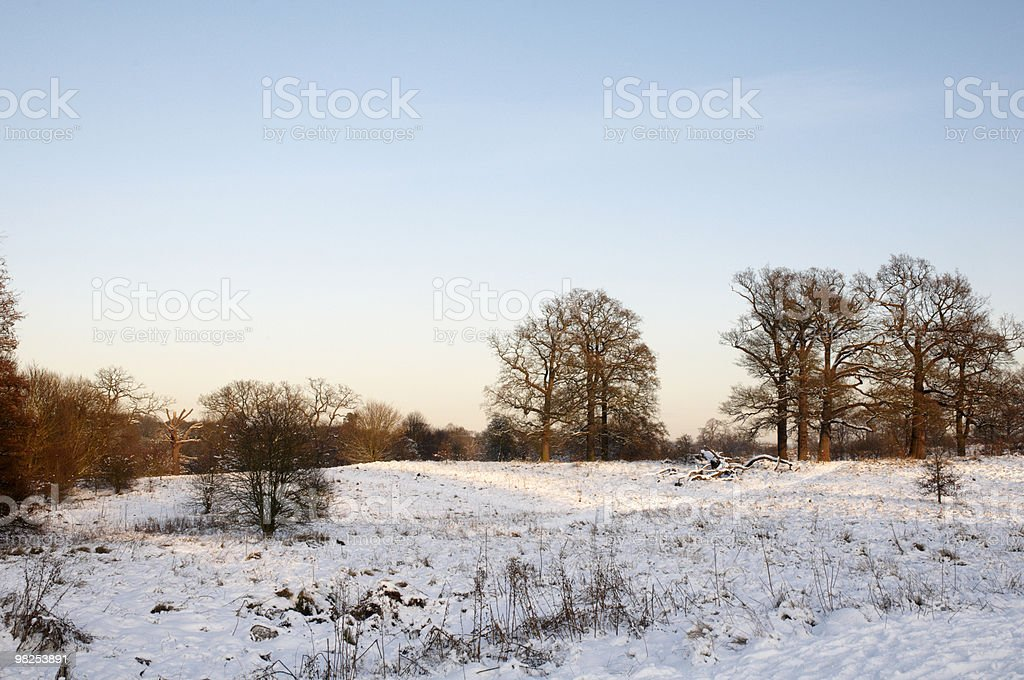 Winter park royalty-free stock photo