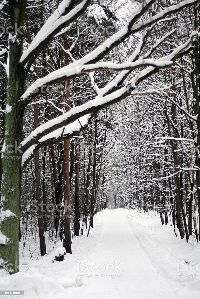 Winter park road royalty-free stock photo