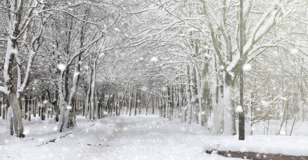 Winter park under the snow a snowstorm in the city park park f picture id991844318?b=1&k=6&m=991844318&s=612x612&w=0&h=1dpog3vym 68ufar7prqxhr1ouok3hu6692dntbtiou=